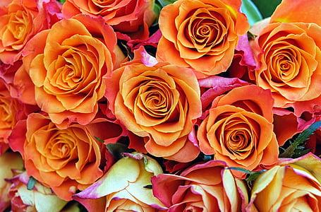 Hoa hồng, Hoa, Blossom, nở hoa, màu da cam, vườn hoa hồng, Thiên nhiên