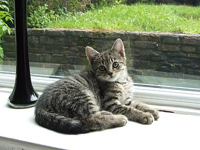 猫, 猫, 子猫, 子猫, 動物, ペット, ペット