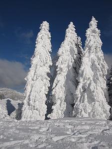fir, snow, winter, snowy, wintry, winter magic, snow landscape