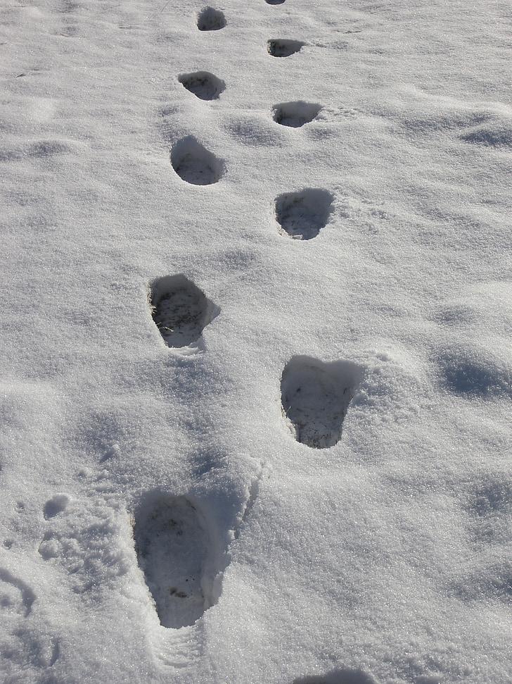 pēdas, pirkstu nospiedumi sniegā, sniega, ziemas, ceļi, kāju pēdas