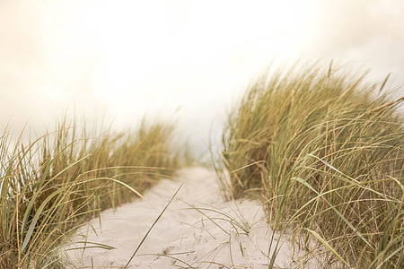 písek, tráva, pláž, Příroda, léto, pobřežní, mořské pobřeží