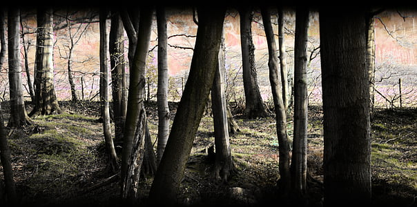 forest, mystical, nature, trees, mood, magic forest, forest path
