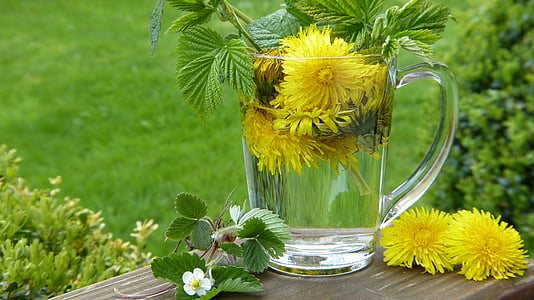 Púpava, taraxum, Tee, Strawberry listy, kvet, kvet, bylinky