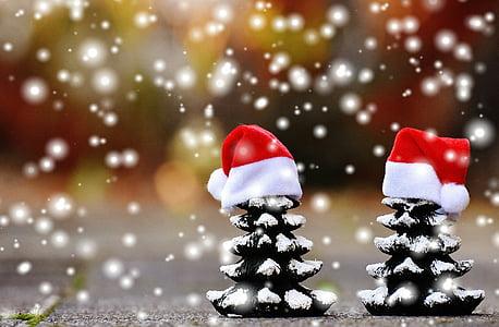 christmas, firs, snow, trees, funny, santa hat, christmas time