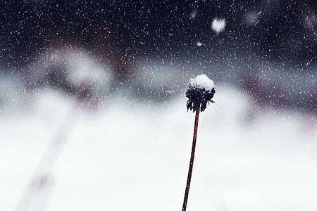 blur, close-up, cold, flower, focus, frozen, ice