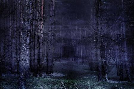 Forest, brouillard, mystique, contes de fées, atmosphère, gespenstig, arbre