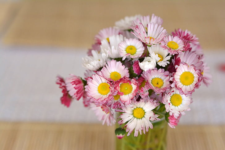 bouquet, daisies, flowers, decoration, the delicacy, daisy