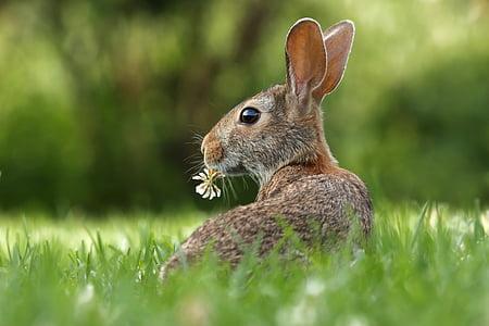 brown, rabbit, biting, white, flower, green, grass