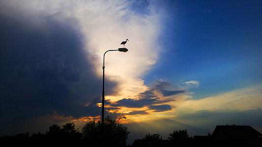 bird, cloud's, sunset, stork