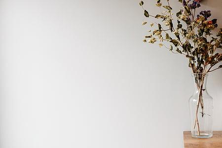 klar, Glas, Vase, getrocknet, Anlage, Foto, Glas