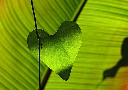 Yeşil, yaprak, kalp, Gölge oyunu, yaprak damarları, doğa, yeşil renk