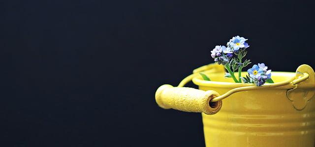 cub, no m'oblidis, flor, groc, cub groc, targeta de felicitació, bodegons