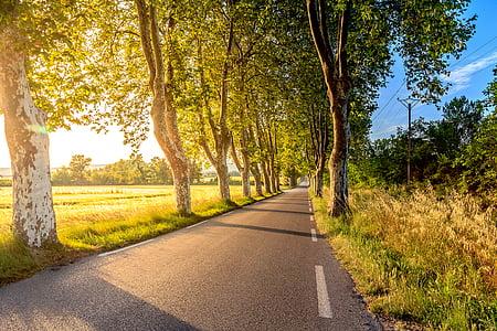 natura, carreteres, verd, arbres, herba, planes, cel