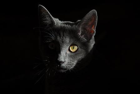 котка, животни, котки, портрет на котка, котка лице, котенце котка, котешко око