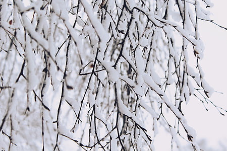 snow, branches, winter, nature, tree, cold, branch