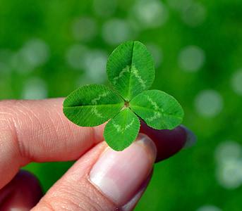 Klee, Four leaf apila, vihreä, Leaf apila onnea, onnenkalu, lehti, Luonto
