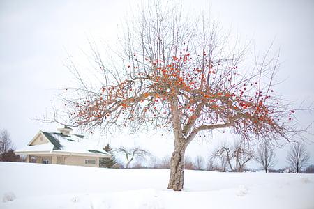 apple tree, winter apple tree, winter, snow, landscape