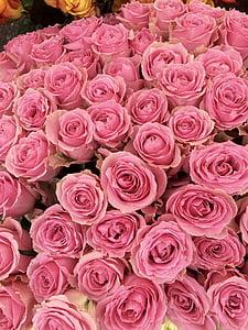 Roses, l'amor, flors, romàntic, rosa vermella, flor, flor