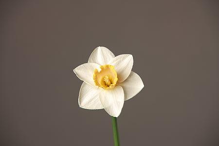 flower, white, white flower, orchid, petal, flower head, freshness