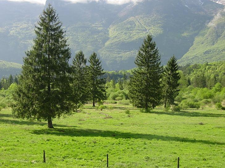 pine, field, nature, mountains, slovenia, rural landscape, landscape