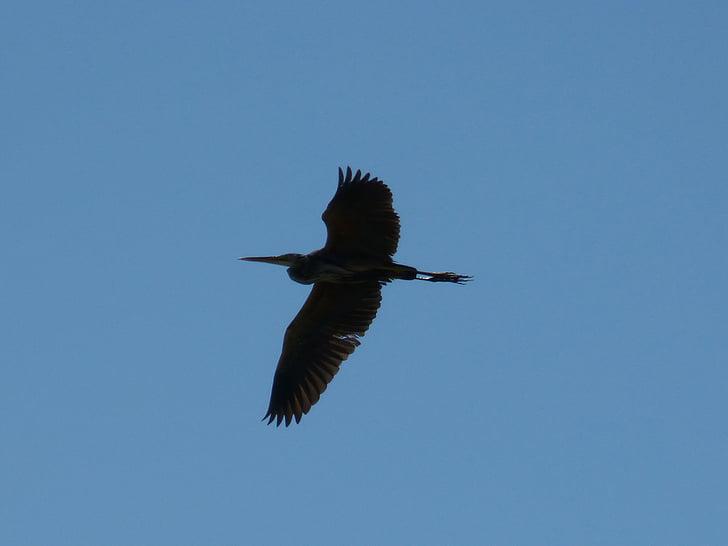 Vodomar, nebo, plava, ptica