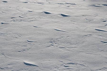 schneeflaeche, tuyết, mùa đông, wintry, mùa đông lạnh, lạnh, nguồn gốc