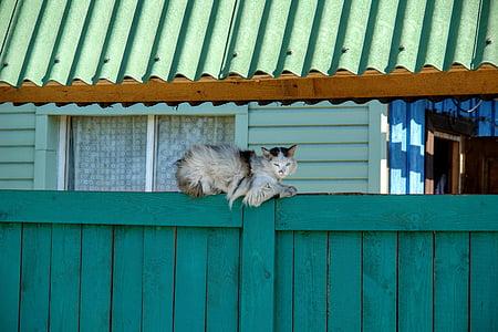 cat, concerns, relax, goal, pet, rest, watch