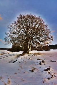 wintry, winter mood, tree, snowy, snow, winter, winter magic
