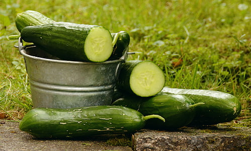 cogombres, jardí, collita, cultiu d'hortalisses, verd, Frisch, Hort