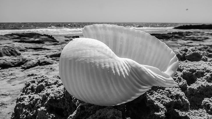 closca, platja, closca, Mar, natura, l'estiu, blanc