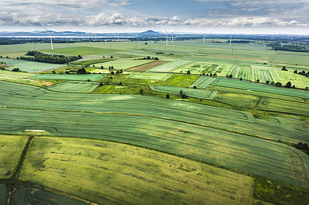 green, grass, field, farmland, grasses, agriculture, farm