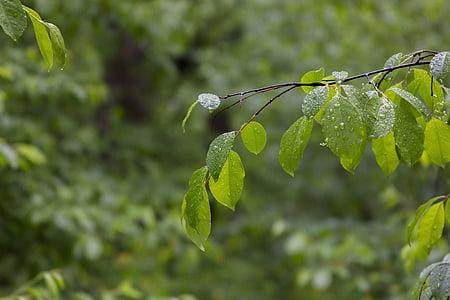 list, Zelená, Forest, Príroda, zelené listy, tmavozelená, listy