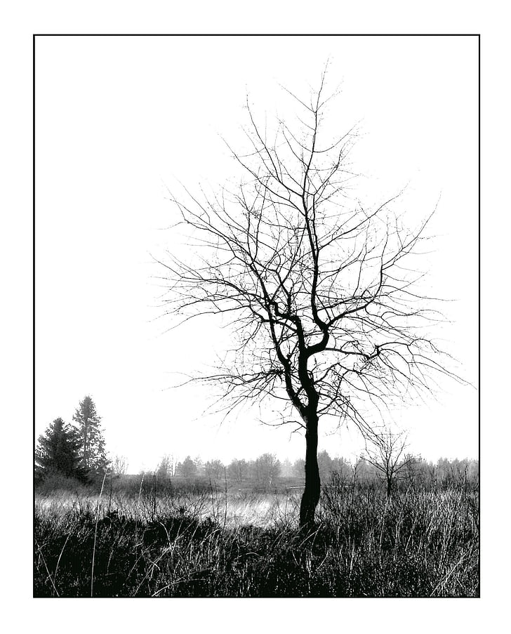 winter, white, sky, tree, individually, nature, still life