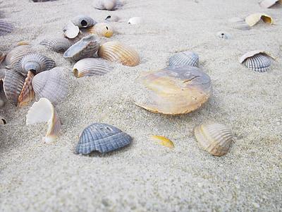 closca, platja, sorra, vacances, Mar, platja de sorra, l'habitatge