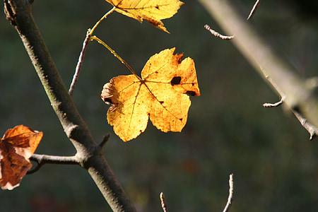 jesień, pozostawia, Spadek liści, Jesienny Las, października złoty