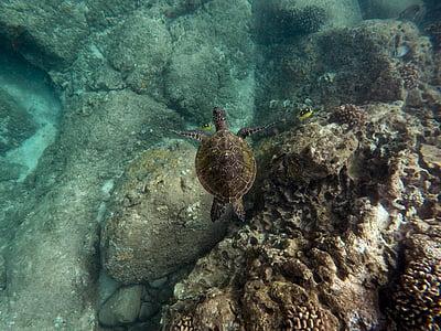 тварин, Coral, риби, океан, риф, гірські породи, море