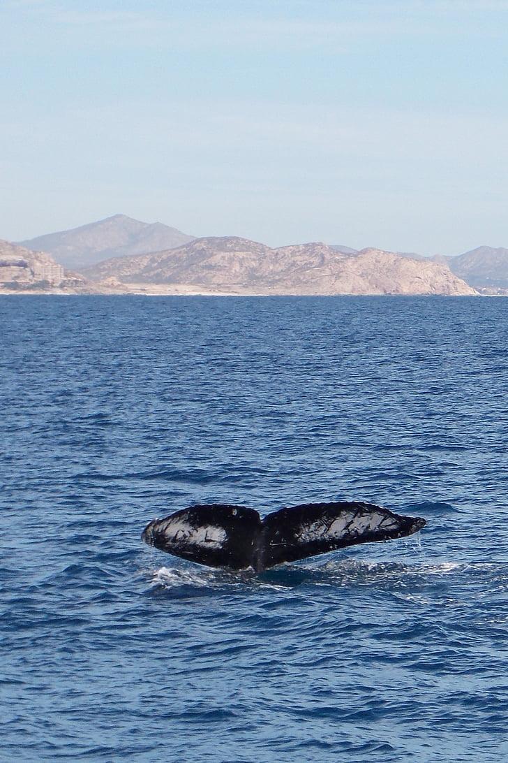 Whale, havet, stranden