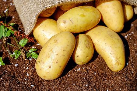 kartul, köögiviljad, erdfrucht, Bio, saagi, Aed, toidu ja joogiga