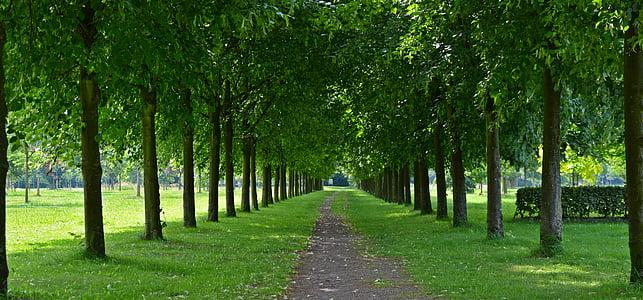 park, avenue, walk, trees, tree lined avenue, green, tree