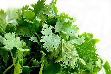 coriandre, herbes, aliments, verd, cuina, plat, julivert