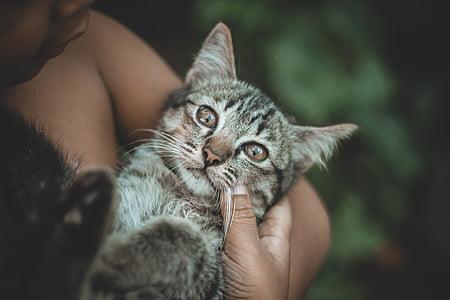 animal, blur, boy, close-up, domestic, domestic cat, eyes