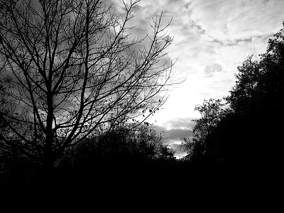 silhouette, trees, black and white, skies, branches, morgenstimmung, shadow