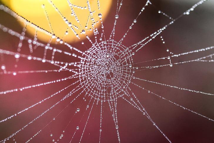 web, water droplets, dew drops, beadwork, macro, nature, backgrounds