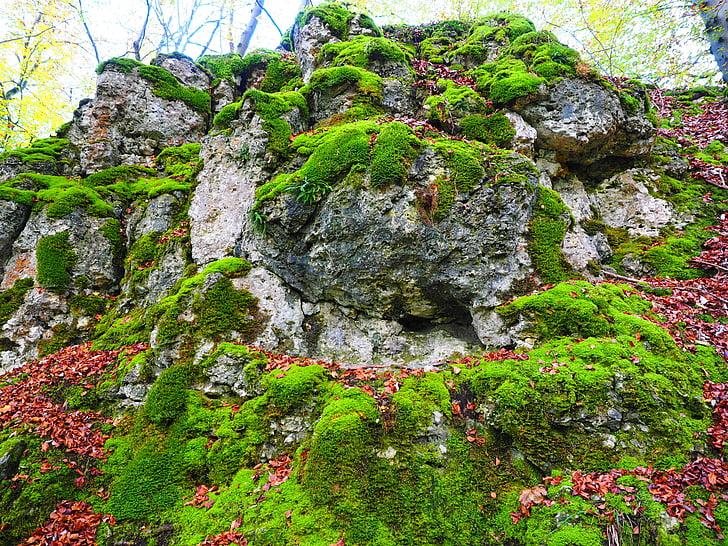 pedra, molsa, bemoost, verd, cobert, per descomptat, bosc