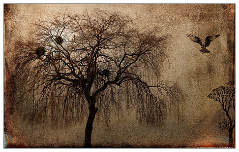 landscape, mystical, tree, raptor, bird, mood, lighting