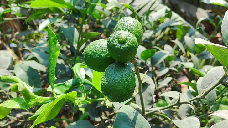 Lime, Anläggningen, grön