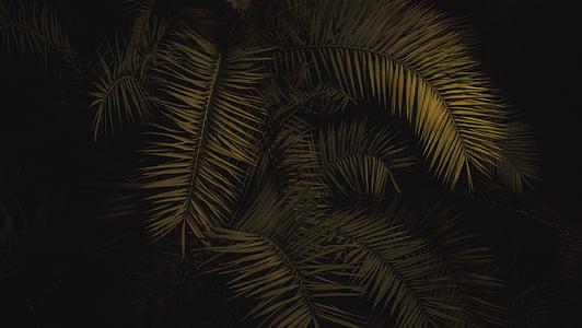 zelená, kapradina, růst, Příroda, závod, vějířovitý, žádní lidé