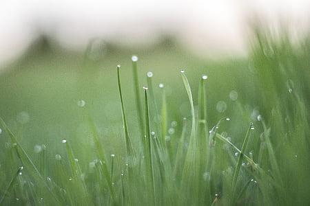 dugg, feltet, gresset, eng, morgen, natur, vanndråper