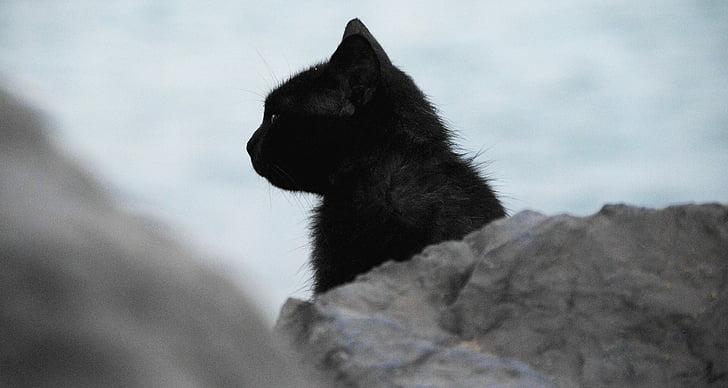 Crna maca južna Afrika