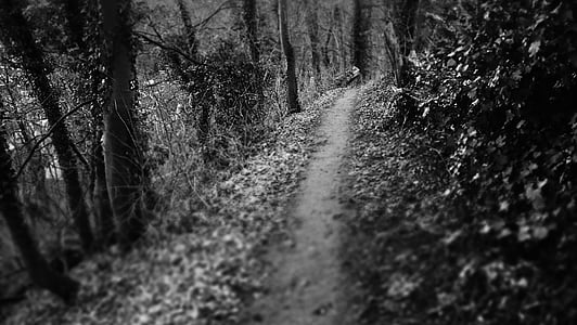 dark path, path, woods, mysterious, mysterious path, eerie, black and white